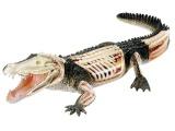 X-ray SnapKits 02095 - krokodýl Plastikové modely